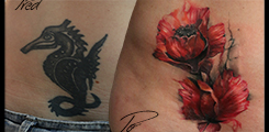 Poppies, cover-up,